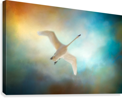 SWAN WINGS MICHEL SOUCY  Canvas Print