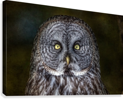 Stare Down with a Great Grey Owl  Canvas Print