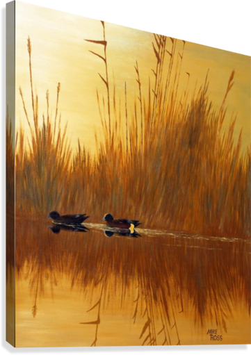 AMERICAN WIGEON MIKE ROSS  Canvas Print