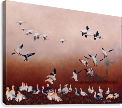 SNOW GEESE MIKE ROSS  Canvas Print