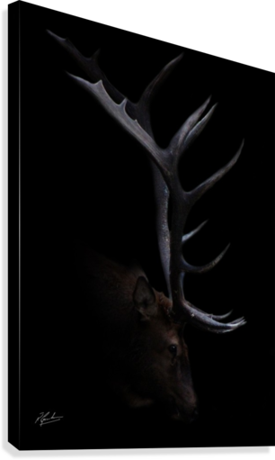 ELK IN BLACK RONNIE B GOODWIN  Impression sur toile