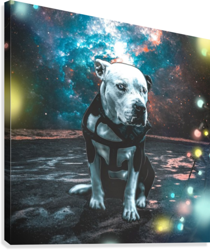 cosmos background space dog  Canvas Print