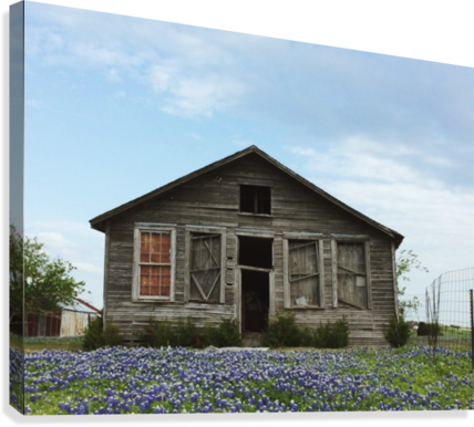 Blue Bonnet Shack  Canvas Print