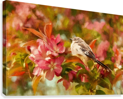 Sparrow In The Apple Tree  Canvas Print