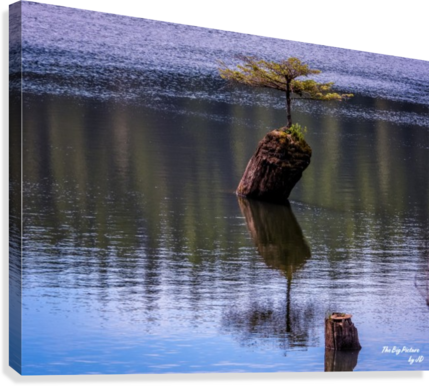 FAIRY LAKE BONSAI TREE THE BIG PICTURE BY JD  Canvas Print