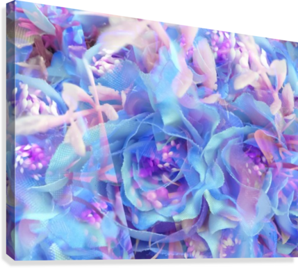 blooming blue rose texture abstract background  Canvas Print