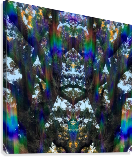 TREE FAMILY DEROY MULTIDIMENSIONAL PHOTOGRAPHY  Canvas Print