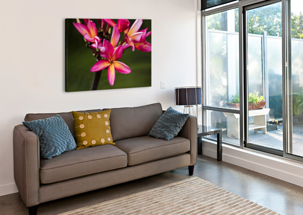 CLOSE-UP OF BRIGHT PINK PLUMERIA FLOWERS; MAUI, HAWAII, UNITED STATES OF AMERICA PACIFICSTOCK  Canvas Print