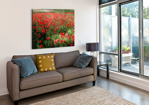 ROLLING FIELDS WITH POPPIES DOROTHY BERRY-LOUND  Canvas Print