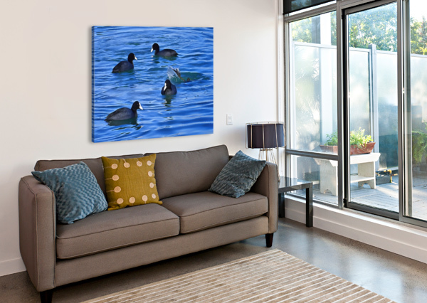 COOTS FEEDING DOROTHY BERRY-LOUND  Canvas Print