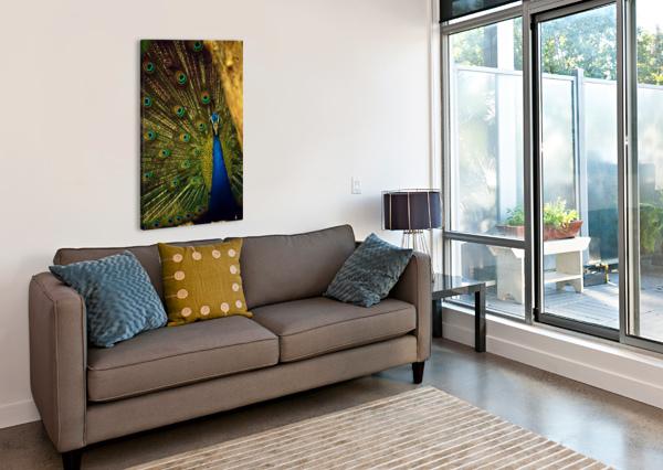BLUE AND GREEN PEAFOWL SHAMUDY  Canvas Print