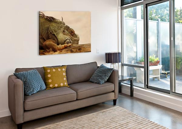 ANIMAL REPTILE LIZARD IGUANA SHAMUDY  Canvas Print