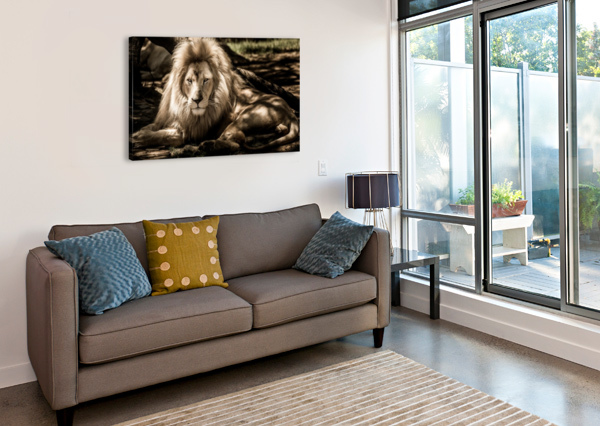 MAMMAL LION ANIMAL PORTRAIT SHAMUDY  Canvas Print