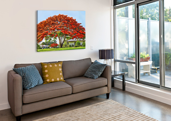 ROYAL POINCIANA TREE HH PHOTOGRAPHY OF FLORIDA  Canvas Print