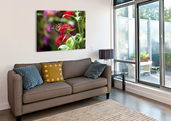 BUTTERFLY CONNIE MAHER  Canvas Print