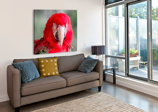 RED PARROT  CONNIE MAHER  Canvas Print