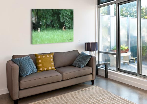 BUNNIES TWO BRIAN CAMILLERI PHOTOGRAPHY  Canvas Print