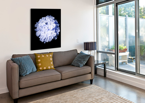 BLUE PLUMBAGO CONNIE MAHER  Canvas Print