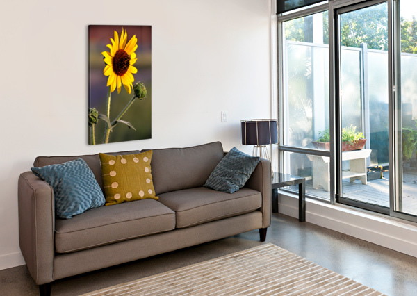 SUNFLOWER BOB VOGT  Canvas Print