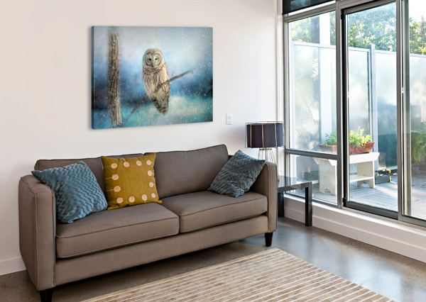 BARRED OWL SOLITUDE MICHEL SOUCY  Canvas Print