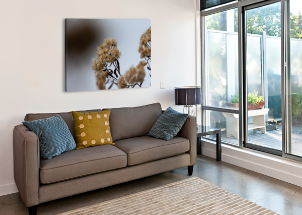 WINTER FLOWERS CHRIS COULING  Canvas Print