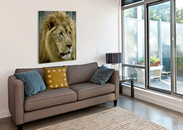 EXTREME CLOSE UP LION CONNIE MAHER  Canvas Print