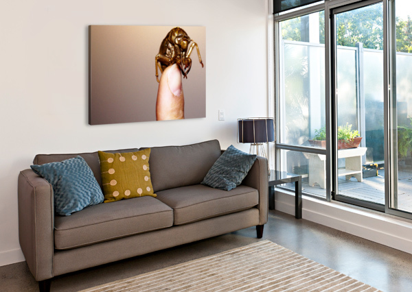 GOLDEN MOLT ANDREW WOOLNER  Canvas Print