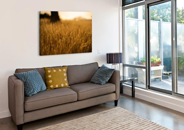 GOLDEN HOUR FIELD DAVID YOON  Canvas Print