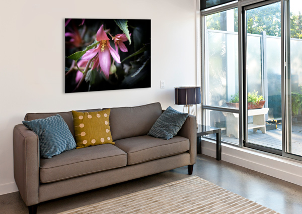 BEGONIA  CONNIE MAHER  Canvas Print