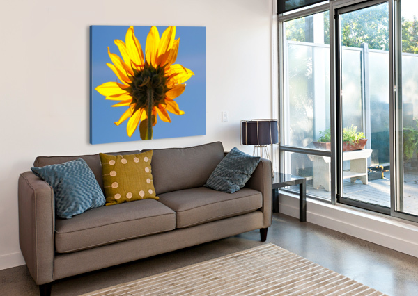 GLOWING HELIOPSIS BERN E KING PHOTOGRAPHY  Canvas Print