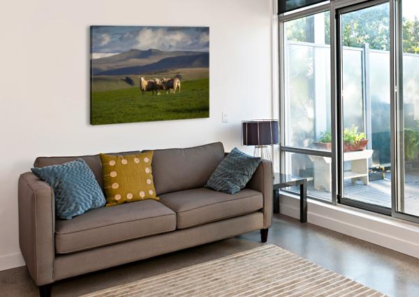 SHEEP ON THE BRECON BEACONS LEIGHTON COLLINS  Canvas Print