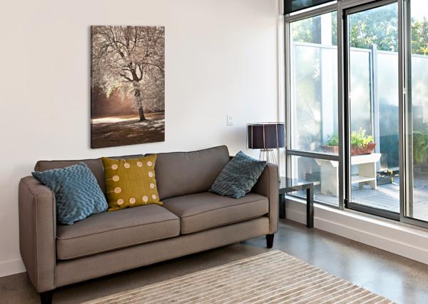 AUTUMN TREE IN SUNLIGHT ASSAF FRANK  Canvas Print
