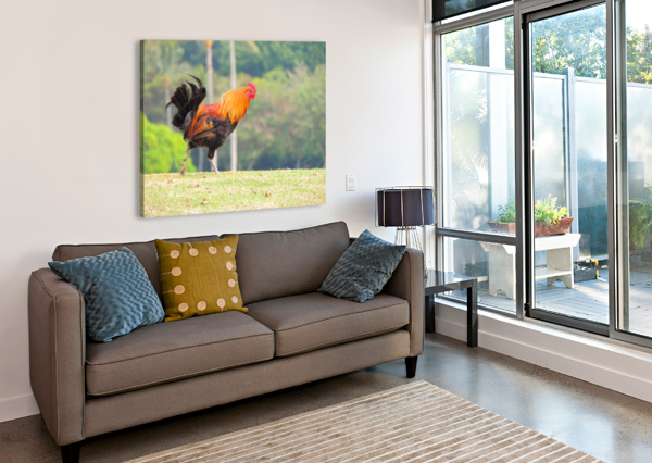 RED ROOSTER 360 STUDIOS  Canvas Print