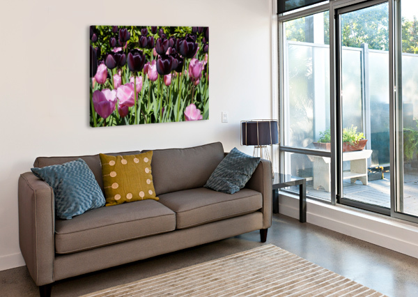 SPRING BLOOMS OF HOLLAND 5 OF 8 24  Canvas Print