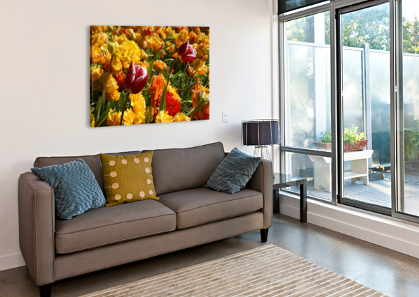 SPRING BLOOMS OF HOLLAND 7 OF 8 24  Canvas Print