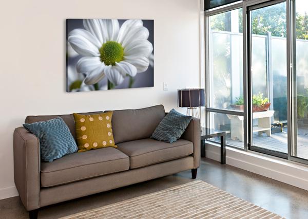 WHITE DAISY ADRIAN BROCKWELL  Canvas Print