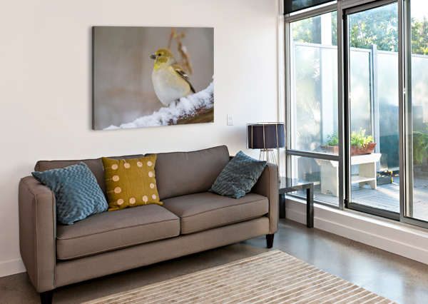 GOLDFINCH AP 1814 ARTISTIC PHOTOGRAPHY  Canvas Print