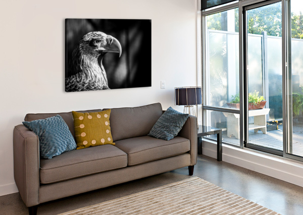 EAGLE AP 2046 B&W ARTISTIC PHOTOGRAPHY  Canvas Print