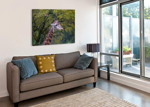 PORTRAIT AP 2906 ARTISTIC PHOTOGRAPHY  Canvas Print
