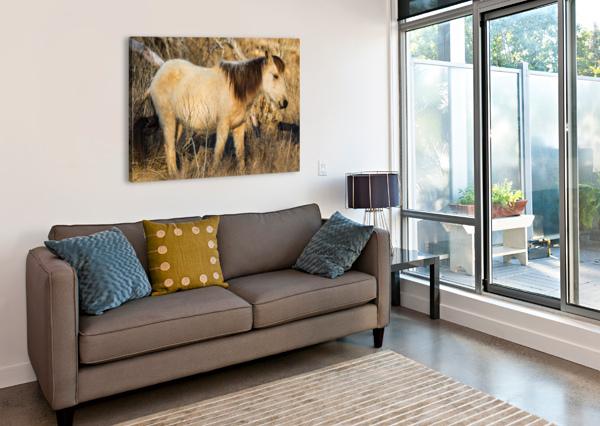 WILD HORSE AP 2740 ARTISTIC PHOTOGRAPHY  Canvas Print