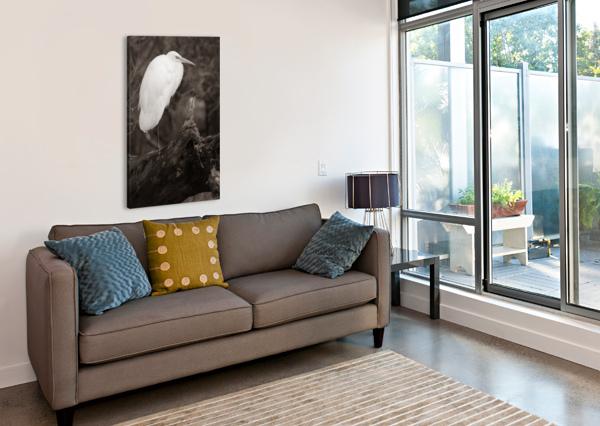 GREAT WHITE EGRET AP 1848 B&W ARTISTIC PHOTOGRAPHY  Impression sur toile