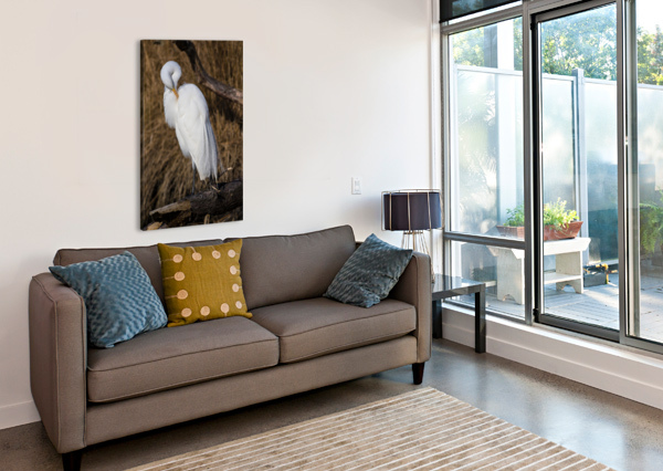GREAT WHITE EGRET AP 2767 ARTISTIC PHOTOGRAPHY  Canvas Print