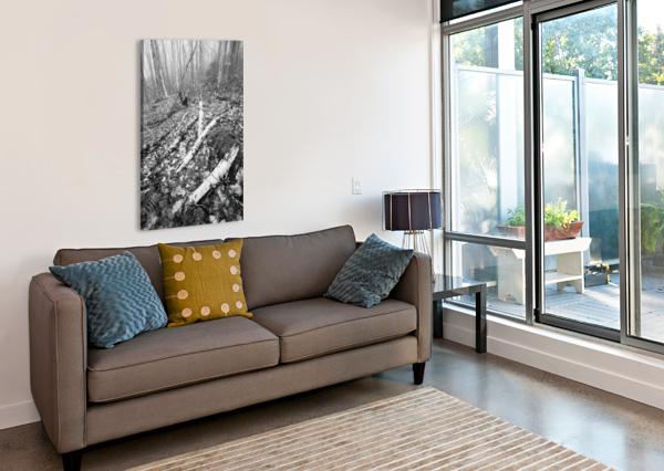 WHITE BIRCH AP 2186 B&W ARTISTIC PHOTOGRAPHY  Canvas Print