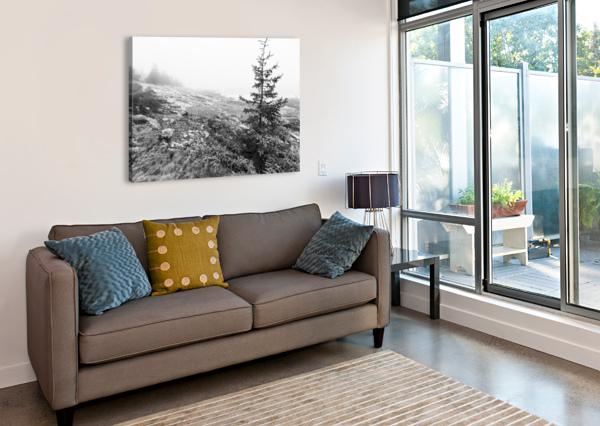LONE PINE AP 2284 B&W ARTISTIC PHOTOGRAPHY  Canvas Print