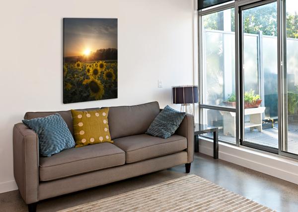 SUNFLOWER SUNSET COREY DOUGLAS  Canvas Print
