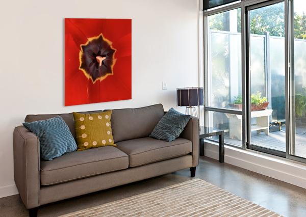 TREASURED TULIP ANDREA MANCUSO PHOTOGRAPHY  Canvas Print