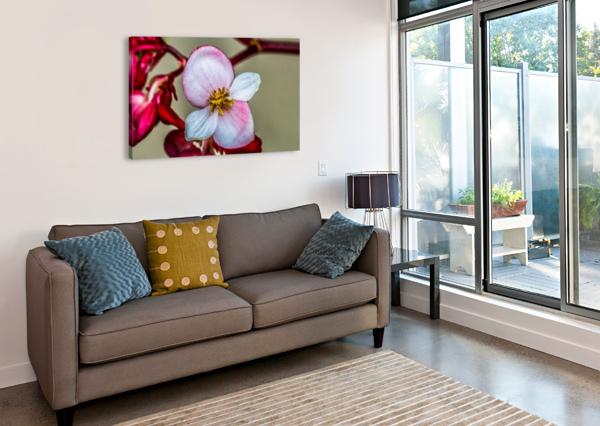 RED FLOWER AUDIE ALEXANDER  Canvas Print