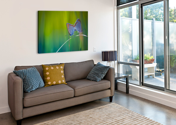 BUTTERFLY SUMMER BACKGROUND LEVENTE BODO  Canvas Print
