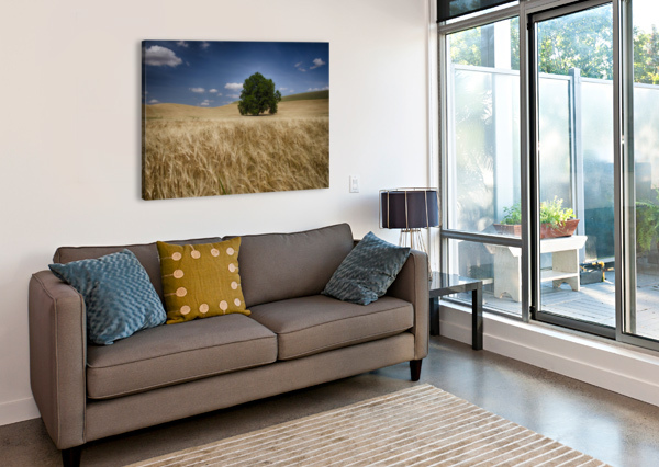 LONE TREE IN A WHEAT FIELD; PALOUSE, WASHINGTON, UNITED STATES OF AMERICA PACIFICSTOCK  Canvas Print