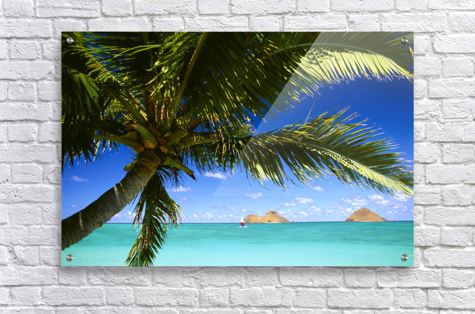 Hawaii, Oahu, Lanikai, Palm Tree Foreground, With Mokulua Islands Background, Sailboat In Turquoise Waters.  Acrylic Print